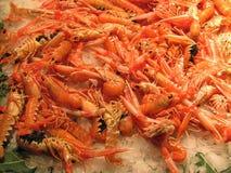 crevettes Image stock