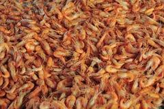 Crevettes bouillies Photos libres de droits