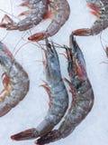 Crevettes congelées fraîches sur la glace Photographie stock libre de droits