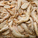 Crevettes crues Photos stock