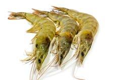 Crevettes crues Image stock