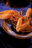 Crevettes crues Photo stock