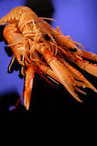 Crevettes crues Photographie stock
