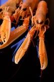 Crevettes crues Images stock