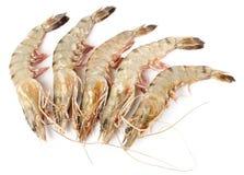 Crevettes crues d'isolement sur le blanc Image libre de droits