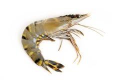 Crevettes crues de tigre Images libres de droits
