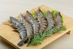 Crevettes crues de tigre Photographie stock libre de droits