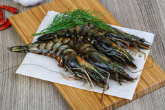 Crevettes crues de tigre Photo libre de droits