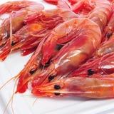 Crevettes crues fraîches Images libres de droits