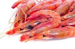 Crevettes crues fraîches Image libre de droits