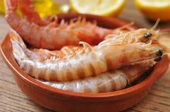 Crevettes crues fraîches Photos stock