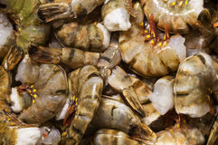 Crevettes crues fraîches et humides de tigre Image libre de droits