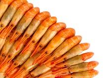 Crevettes cuites Photos stock