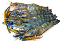 Crevettes d'eau douce Image stock