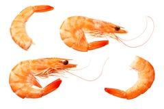 Crevettes d'isolement sur un fond blanc Vue supérieure illustration libre de droits