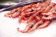 Crevettes en glace Photos stock