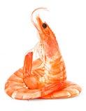 Crevettes fraîches images stock