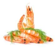 Crevettes fraîches Photo libre de droits