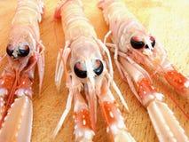 Crevettes fraîches Photographie stock libre de droits