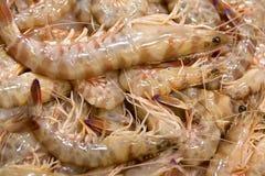 Crevettes fraîches Photos libres de droits