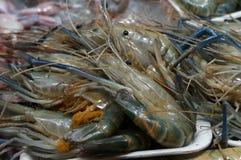 Crevettes fraîches Photo stock