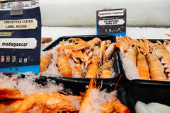 Crevettes ,langoustines fresh fish at supermarket counter. Supermarket stall with raw crevettes ,langoustines  fresh fish counter full with diverse organic fish Royalty Free Stock Images