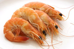 Crevettes roses Photographie stock