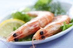Crevettes roses Photographie stock libre de droits