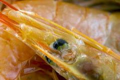Crevettes roses argentines bio Photo libre de droits
