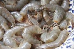 Crevettes roses crues entières Photographie stock libre de droits