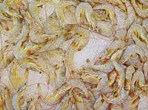 Crevettes roses crues fraîches sur la glace photographie stock libre de droits