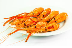 Crevettes roses cuites de tigre Photo stock