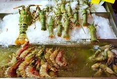 Crevettes roses de homard et de tigre Images stock