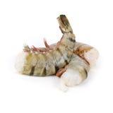 Crevettes roses de tigre Photo stock