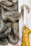 Crevettes roses de tigre sur la poissonnerie Photo stock