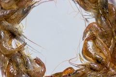 Crevettes roses fraîches de mer photos stock