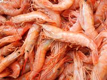Crevettes roses fraîches directement de la mer, à la poissonnerie de Marsalok, Malte Images libres de droits