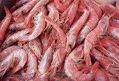 Crevettes roses fraîches sur la glace sur la poissonnerie Photo libre de droits