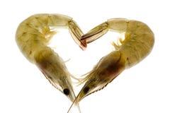 Crevettes roses grises dans l'amour Images libres de droits