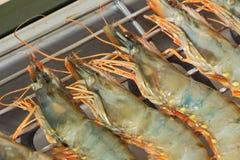 Crevettes roses sur le barbecue électrique Photo stock