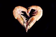 Crevettes roses sur le noir Image stock