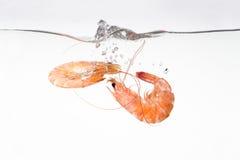 Crevettes roses tombant dans l'eau Images stock