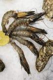 Crevettes royales avec le citron à la glace photos stock
