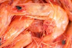 Crevettes sèches Image stock