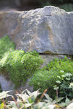 Crevice Garden. With lush moss and vegetation Royalty Free Stock Images