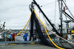 Crew of fishing boat loading nets. Seattle, WA, USA, Oct. 17, 2016: Four men loading a black and yellow fishing net onto commercial fishing boat at Fishermens Royalty Free Stock Images