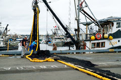 Crew of fishing boat loading nets. Seattle, WA, USA, Oct. 17, 2016: Four men loading a black and yellow fishing net onto commercial fishing boat at Fishermens Stock Photography