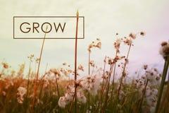 Crezca el fondo del wildflower de la cita del concepto Fotografía de archivo libre de regalías