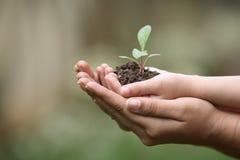 Crezca las plantas Imágenes de archivo libres de regalías