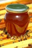 Criação das abelhas imagens de stock